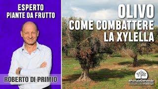Xylella: cosa fare contro la malattia che colpisce l'olivo