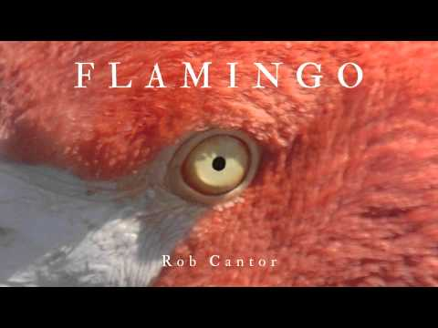 FLAMINGO  Rob Cantor  ONLY