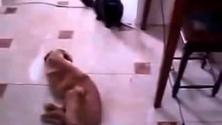 Кот напал на собаку и укусил ее