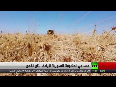 مساعي الحكومة السورية لزيادة إنتاج القمح  - 21:56-2021 / 6 / 17