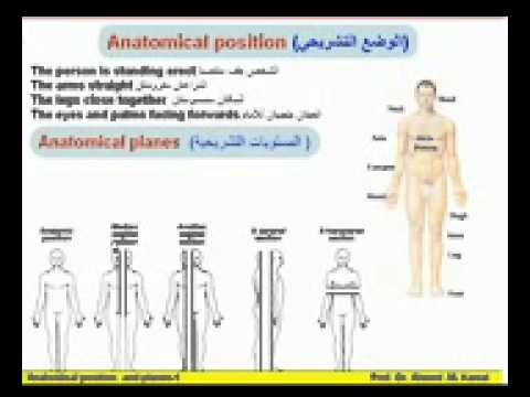 04 Anatomical Terms 1 Anatomical Position & Planes  Azhar Medicine com