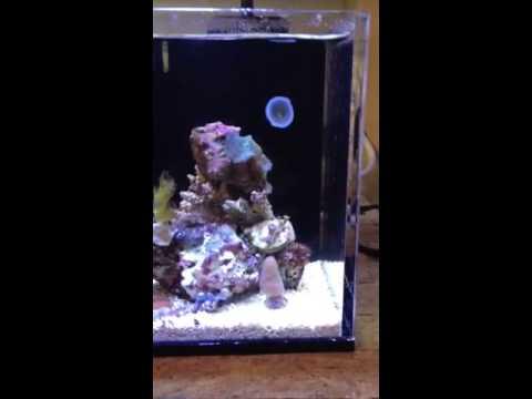 World 39 S Smallest Salt Water Aquarium Micro Pico Youtube