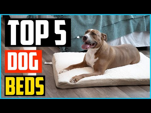 top-5-best-dog-beds-in-2020