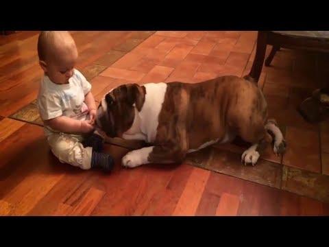 Cute dog & baby compilation 2018 - Gatos y Perros Chistosos y Divertidos Loquendo #2