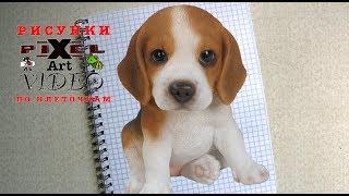 Рисунки по Клеточкам #щенок