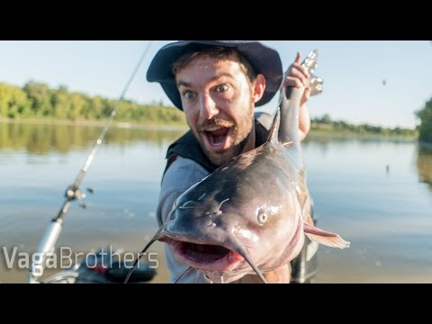 Monster Catfish| Winnipeg, Manitoba Canada