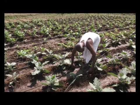 2 साल एक पड़ताल - वाह किसान | Wah Kisan - Success Story - 15 (Spot)