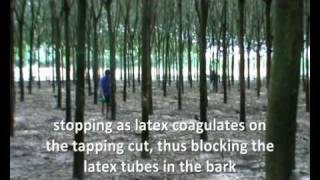 Natural rubber VIETNAM