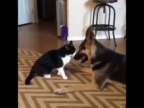 Love Conquers All - Cute Cat And Dog Fight