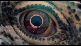 VOYAGE OF TIME - Official Trailer - Coming Soon [HD]