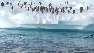 Penguin Fun in Antarctica