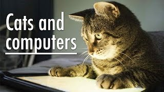Cats and computers 2016. The best compilation cats with a computer 2016 #2