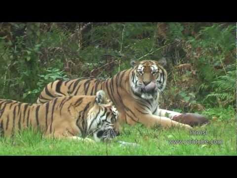 Animals At Worburn Safari Park