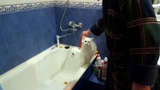 """Дуся себя в """"в Спа салоне """" покажет,и ни один кот-жених ей в любви не откажется."""
