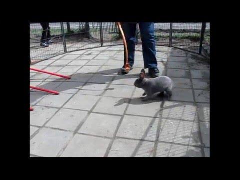 Targetstik Training Rabbit