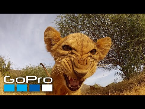 GoPro: Top 10 Animal Encounters