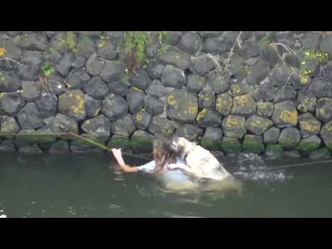 Dog rescued from the water (het IJ)