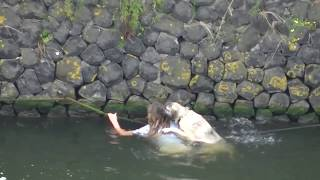 Dog rescued from the water / Hond uit water gered (het IJ, Amsterdam)