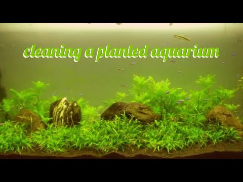 How to clean a fish tank my dirty planted aquarium 1080p for Green water in fish tank