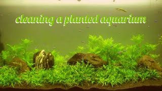 how to clean a fish tank my dirty planted aquarium 1080p