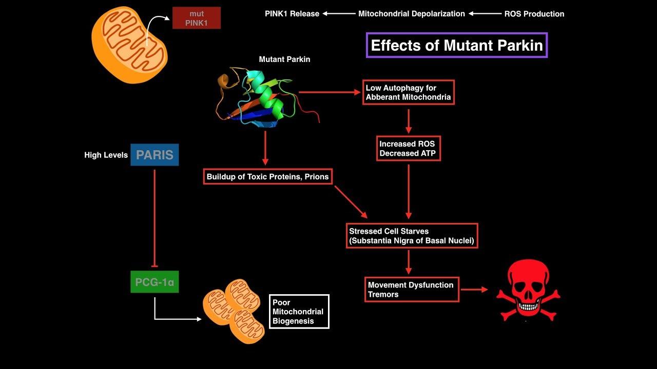 galutinės fazės riebalų nuostolių rezultatai)