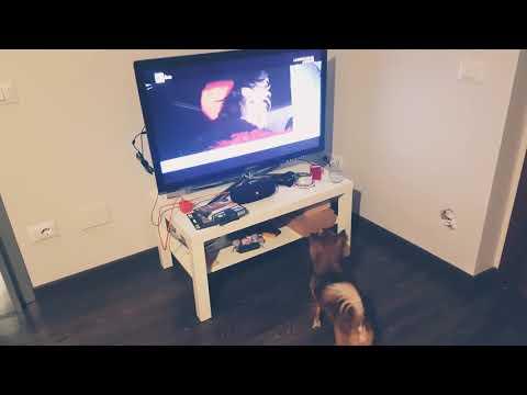 Chihuahua barking to Cruella De Vil