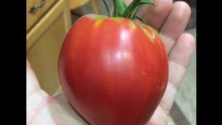 Secrets to Growing the Best Organic Tomatoes at Home