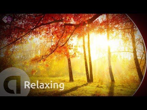 Rustige, Ontspannende Muziek voor de Herfst - Beethoven, Rachmaninov, Fauré ea - Live Concerten