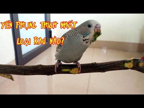 Loại Thức Ăn Nào Có Thể Huấn Luyện Chim Yến Phụng (Vẹt Hồng Kông)?