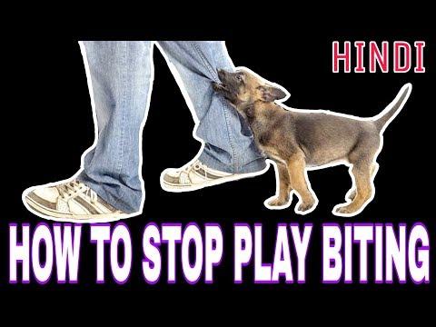 पप्पी के काटने की आदत कैसे दूर करें [ how to stop puppy play biting ]
