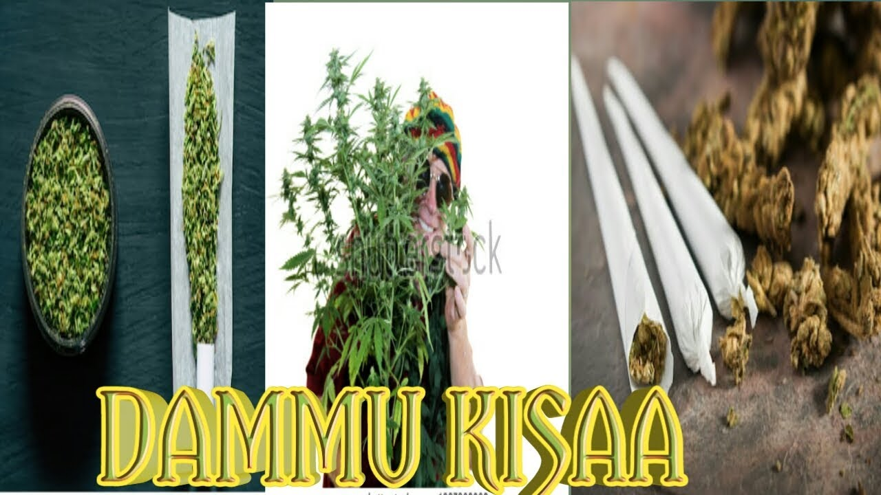 Download Bob Marley Tamil ganja songs  🇸🇳 IN 🇬🇳BOBSI🚬🇨🇬