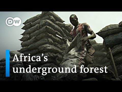 Africa's underground forest | Global Ideas