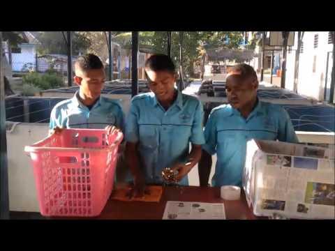 Pengemasan (Packing) lobster oleh taruna Politeknik KP Sorong