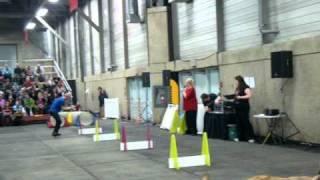 Flyball Edmonton Expo Pet 2011