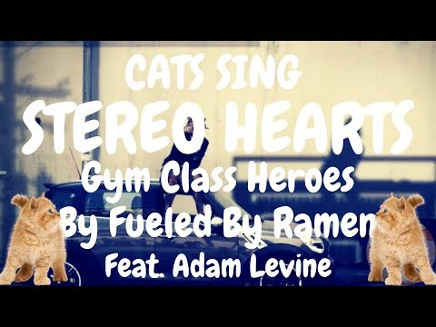 Cats Sing Stereo Hearts (Gym Class Heroes) ft. Adam Levine | Cats Singing Song