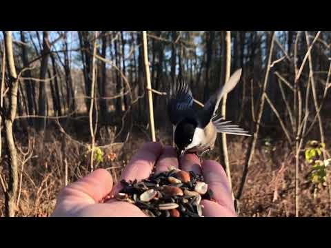 Incredible slow motion wild birds closeup