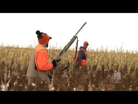 Aberdeen Pheasant Hunt