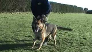 Protection Dog - Heidi And Ben - 17th January 2009 - Caninedrivedevelopment