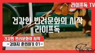 강아지 훈련하기 01 인천,김포,평택,일산,부천,잠실 …