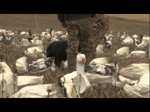 James Creek Outfitters Pa Snow Goose Hunt
