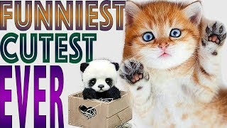 ❤️ Funny Animals video. Cute Dogs and Cats doing funny things ...