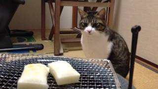 Noel The Cat #78 - Watchcat On Rice Cakes Being Baked