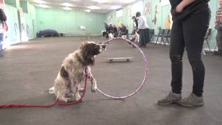 Sussex County Dog Training Classes