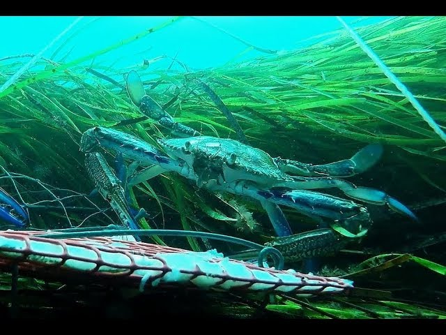 Crabbing adelaide