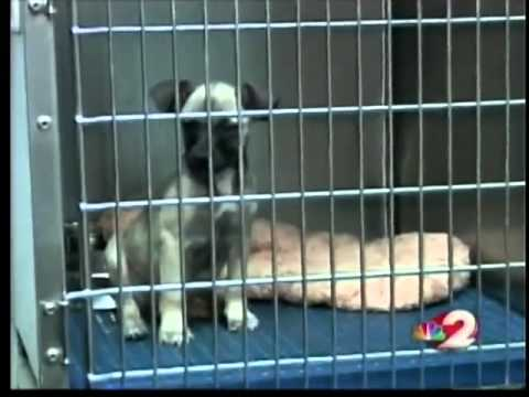 Puppies need help in Preble County