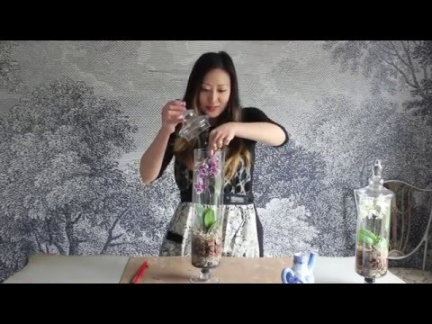 How To Make An Orchid Terrarium Youtube