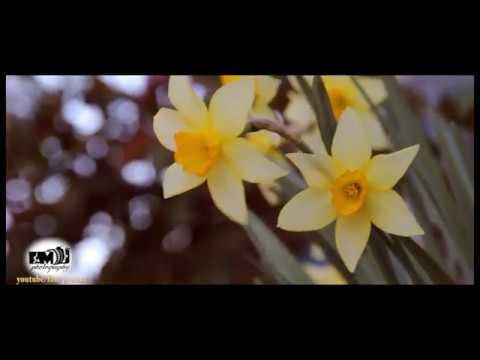 Tebieti Qoruyaq  Tebiet HD menzere HD 2017  nature HD 2017