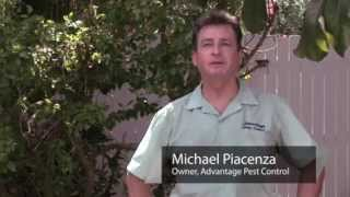 Pest Control   How to Get Rid of Fleas in Grass