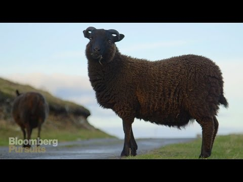 How the World's Softest Wool is Made