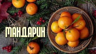 МАНДАРИН - оранжевая радость!